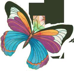 butterfly_251_trans